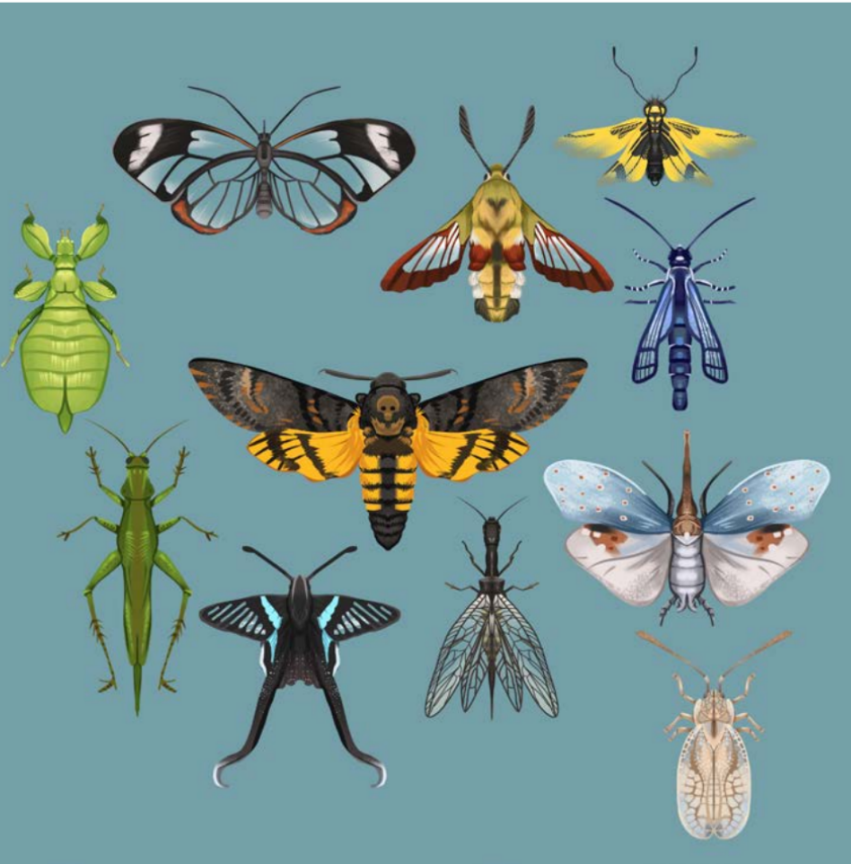 "Alina Brost: ""Tiny Insect Dragons – Insects"""